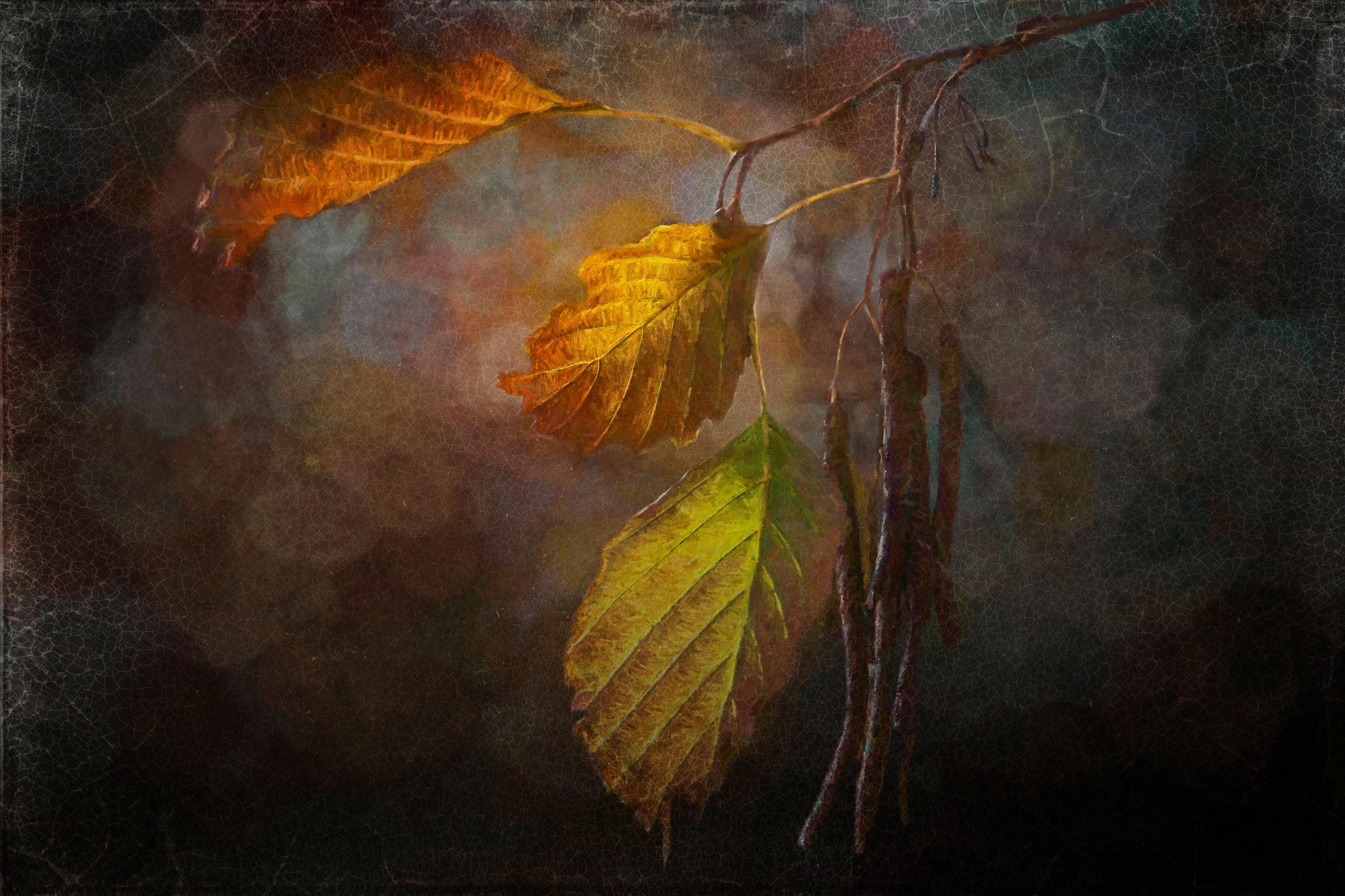 Rose Anderson: Photographer, Photo Illustrator | Baker Artist Portfolio