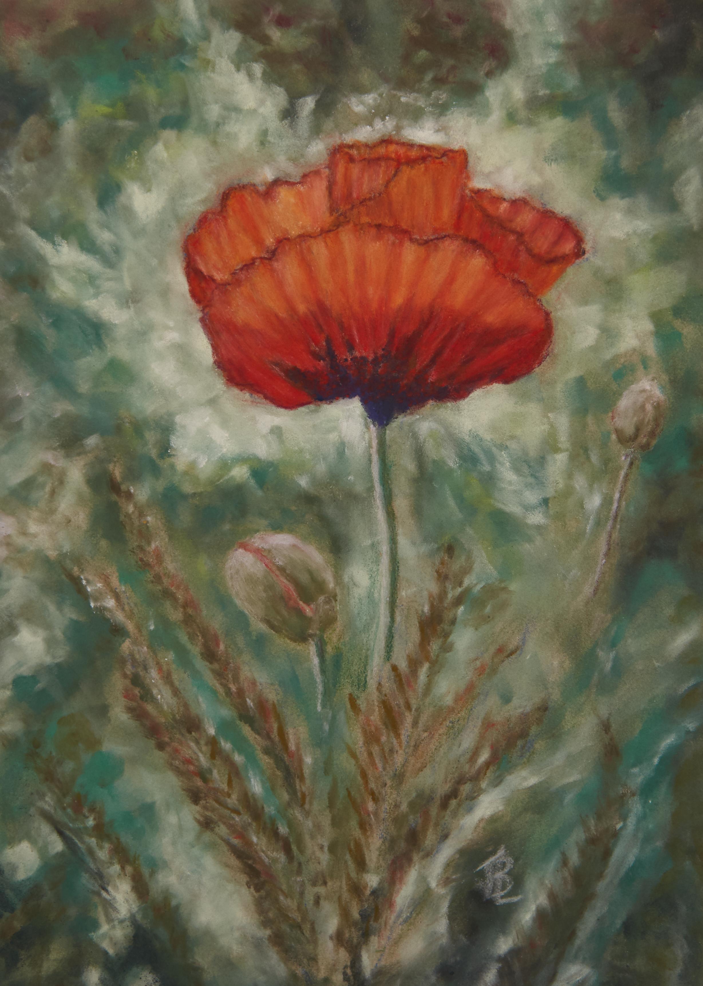 Radiant Poppy