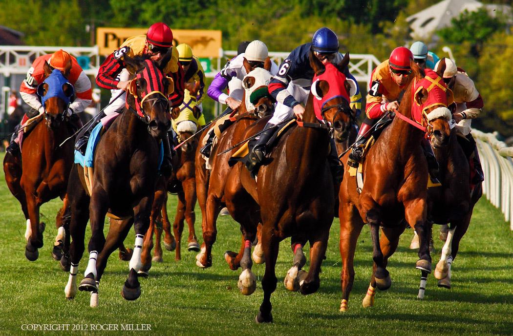 PIMLICO HORSE RACE