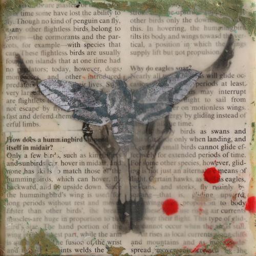 skull,moth,blackandwhite,encaustic