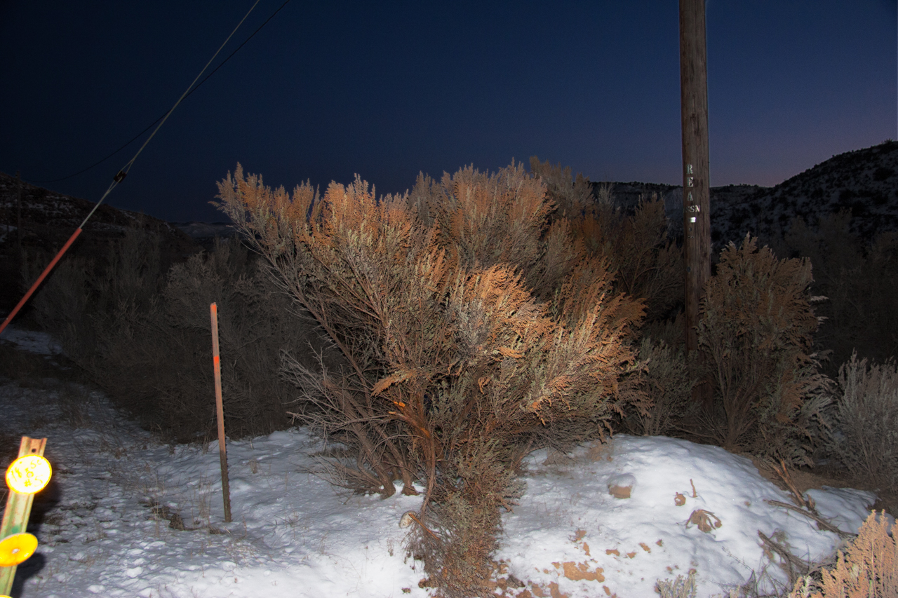 Image of bush in winter with snow on the ground lit by headlights.