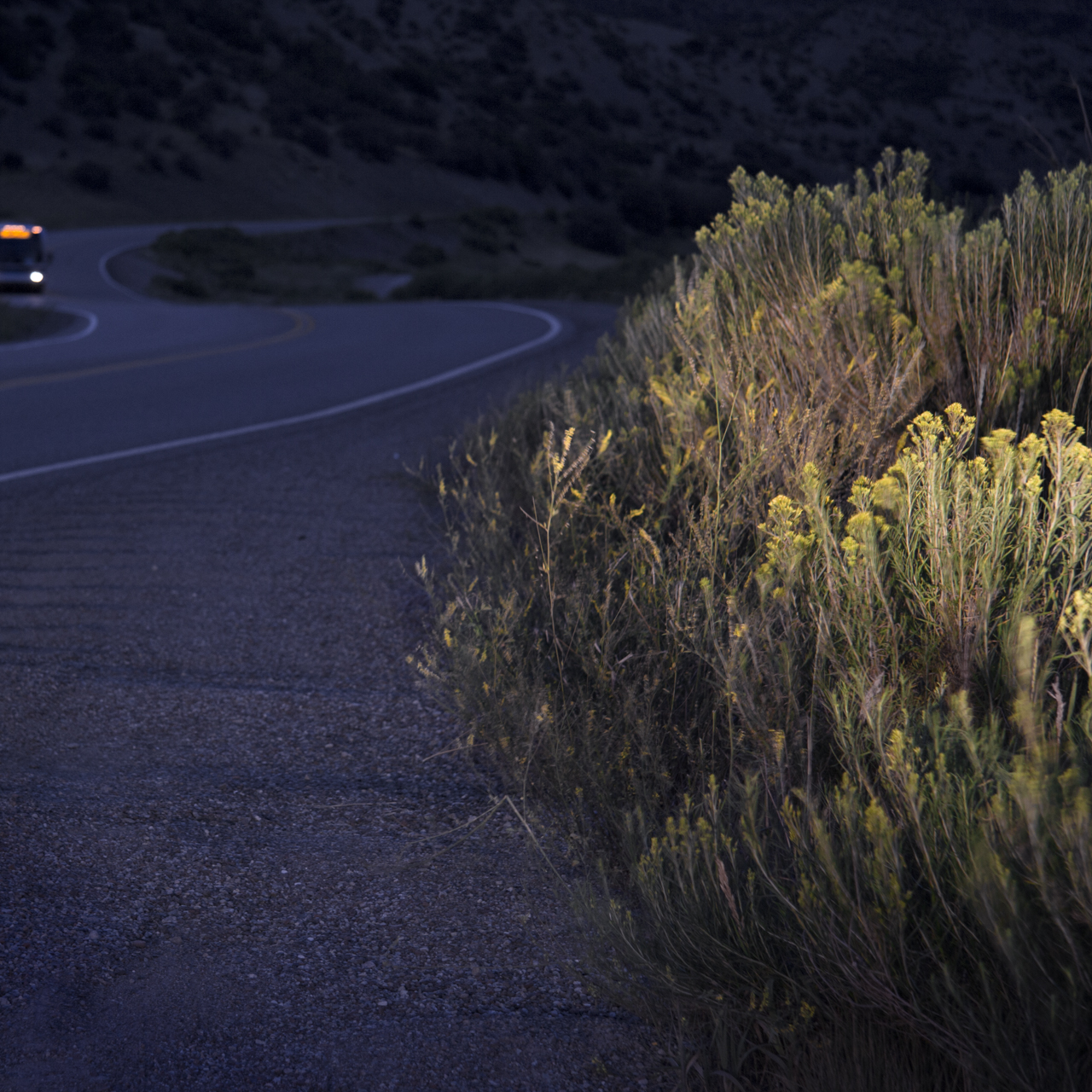 image of Sage, along the side of the road with bus approaching near Snowmass, CO. illuminated by the car headlights.