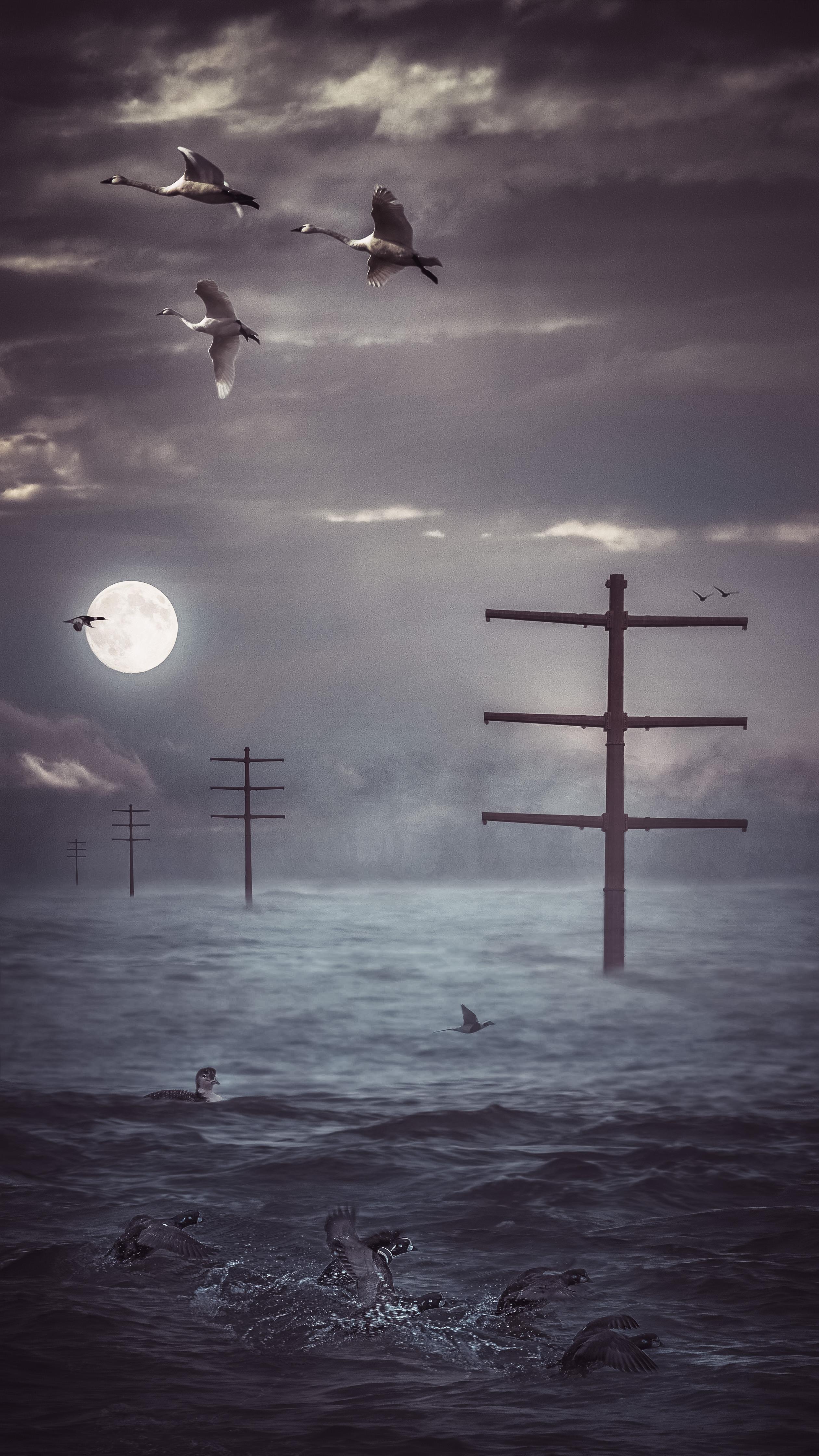 The Pylons Still Stood - Rose Anderson