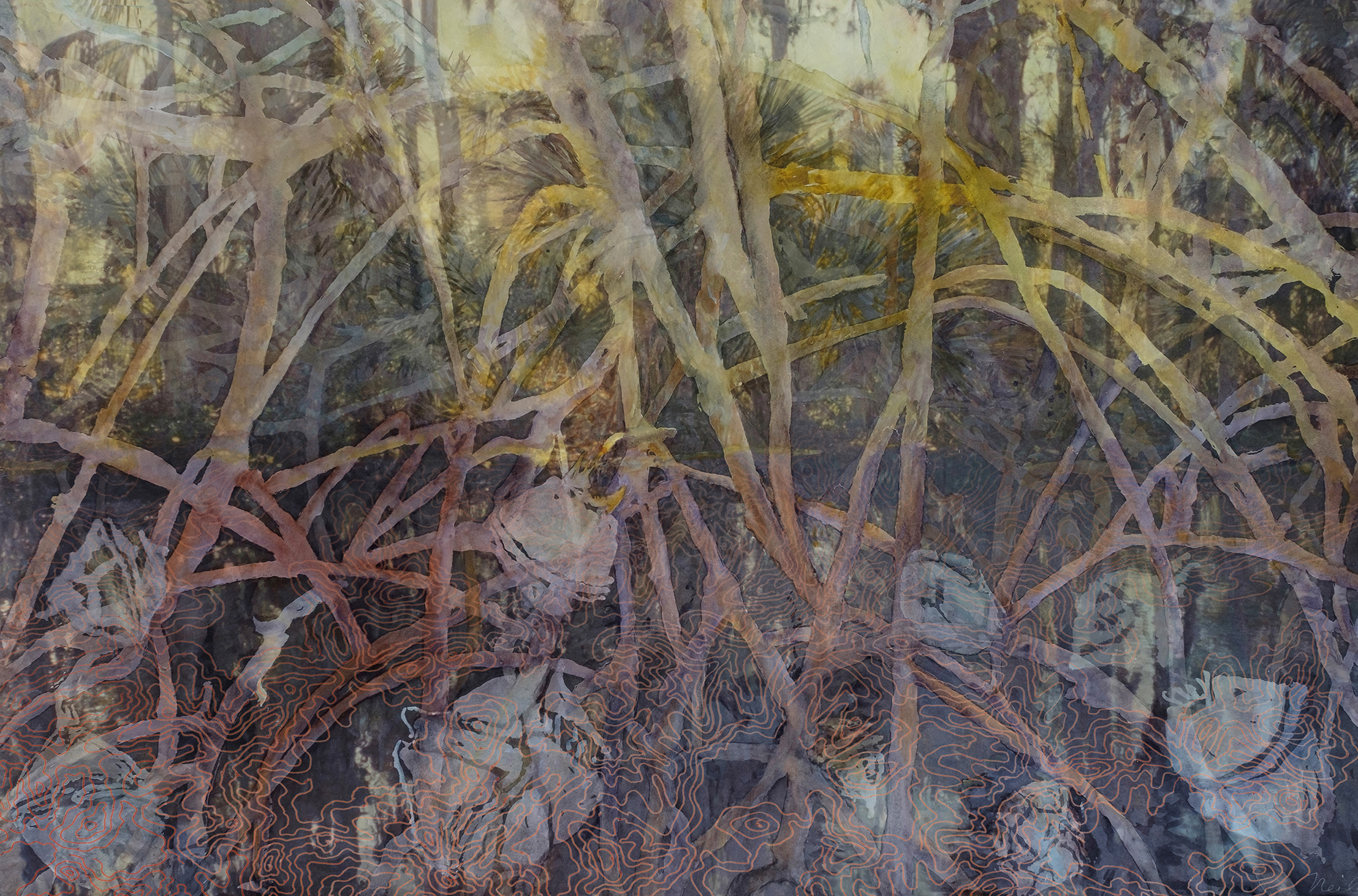"""Mangrove Forest, 2017, Watercolor, archival pigment print on paper, framing plexiglas, 31"""" x 44.75"""""""