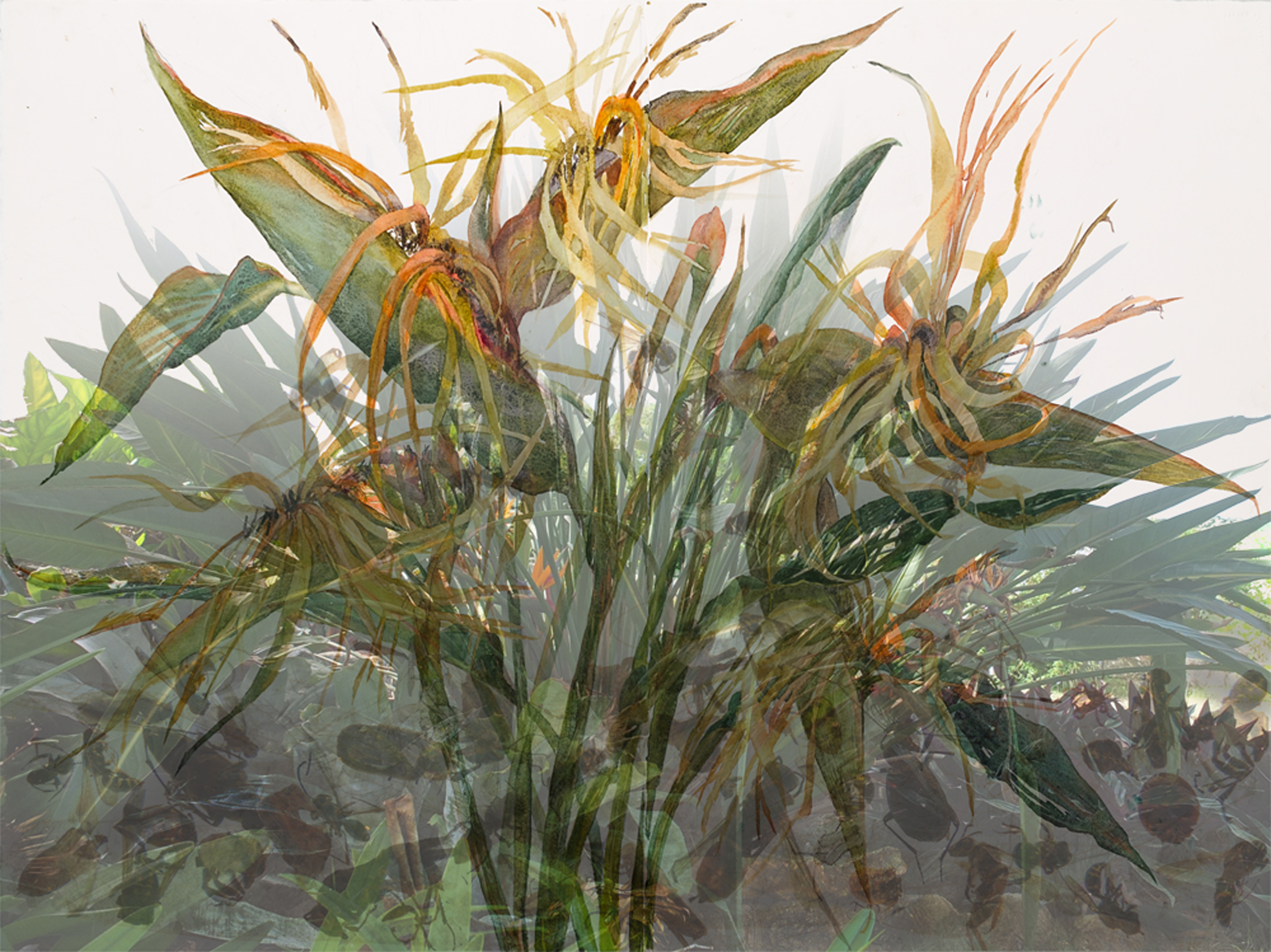 """Other Side of Paradise, 2013, Watercolor, archival pigment print on paper, framing plexiglass, 31"""" x 44"""","""