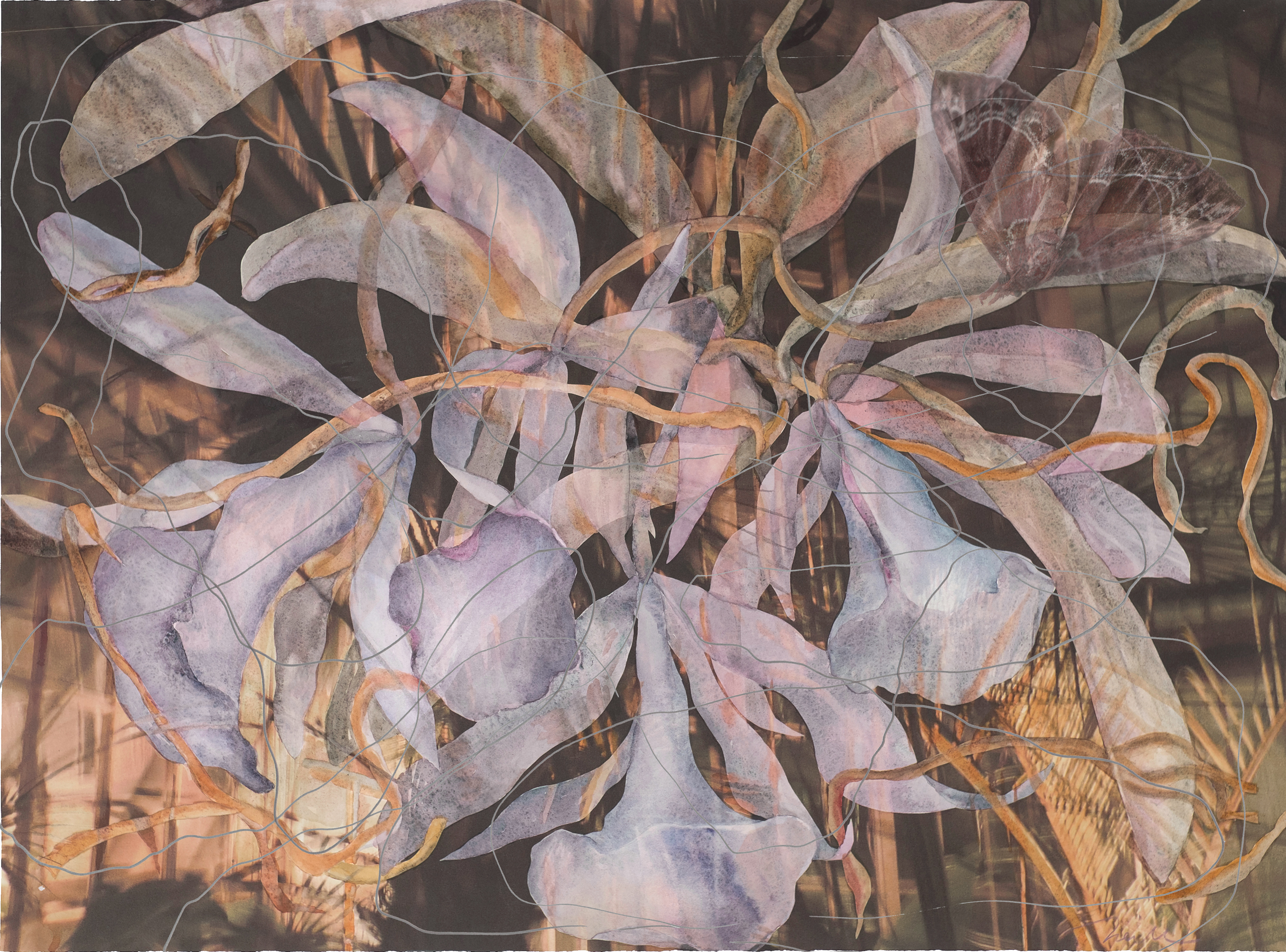 """Ames' Orchid, 2012, Watercolor & Archival Ink Jet Print on Paper & Acrylic, 21.5"""" x 29"""""""