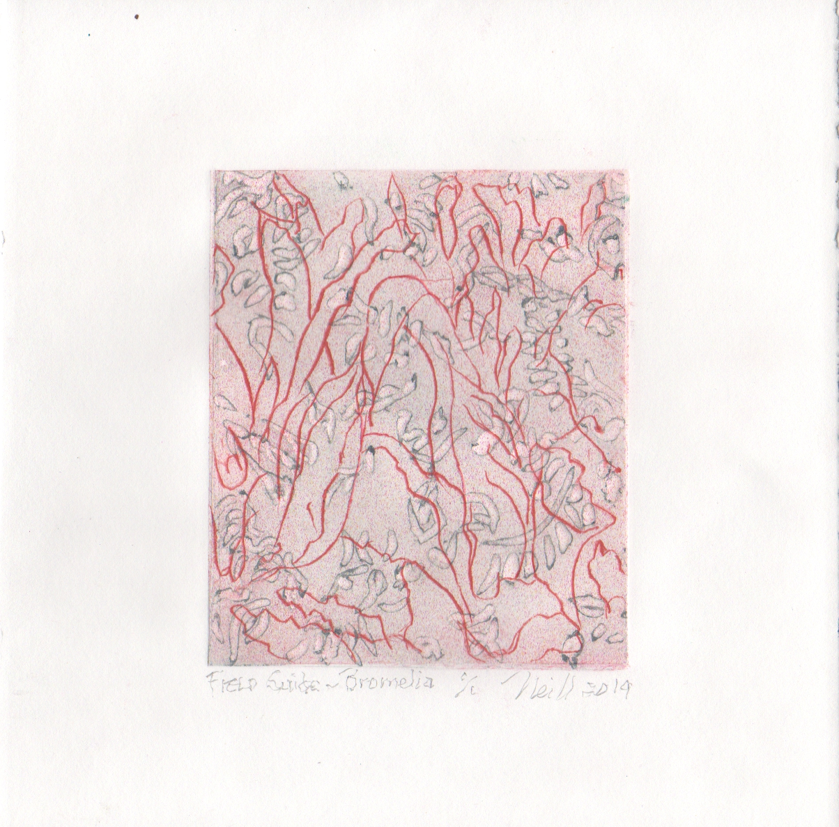 "Field Guild-Bromelia, 1/1, 2019, etching, embossing on paper, 5"" X 4"""
