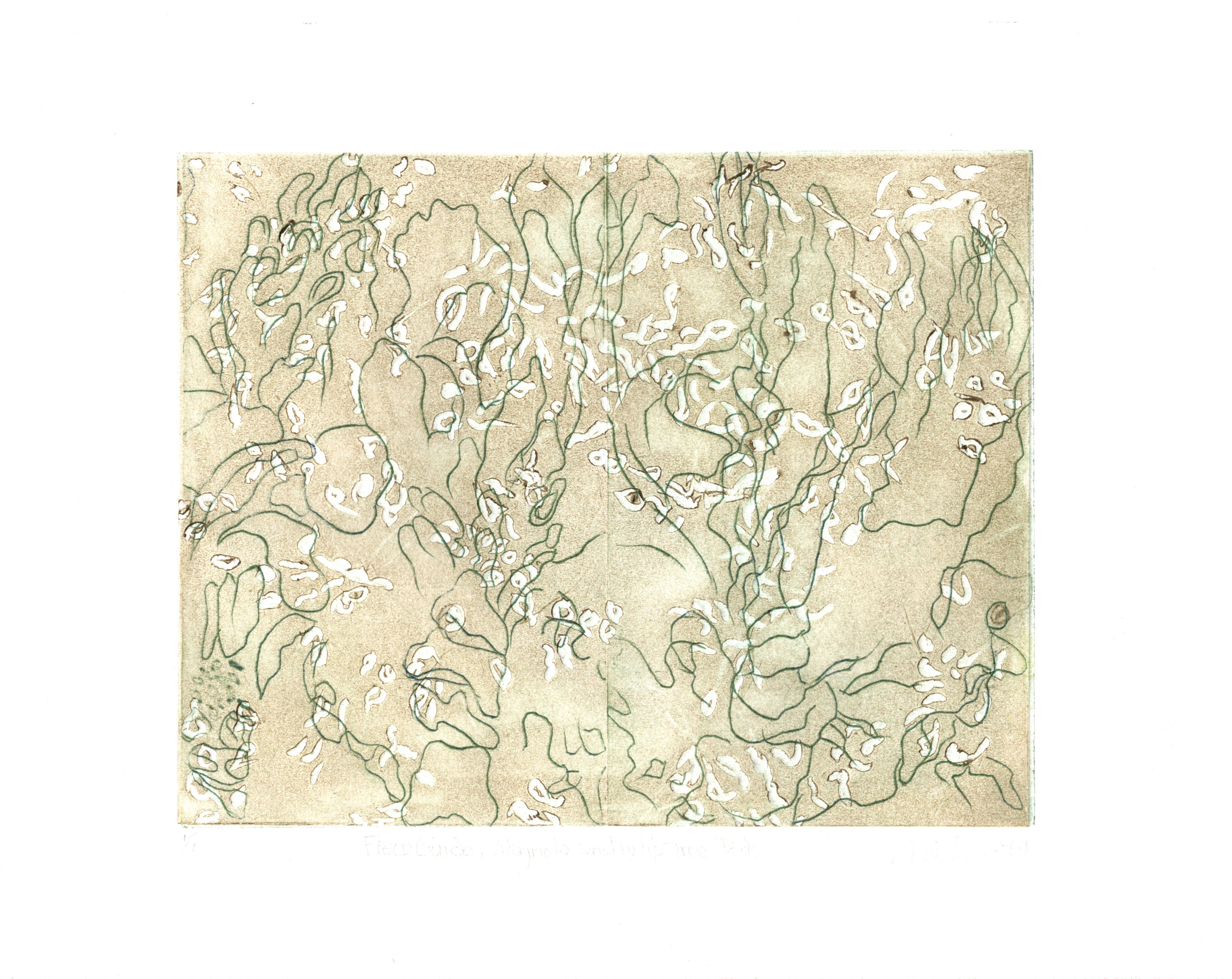 """Field Guide-Magnolia and Tuliptree Pod 1/1, 2019, etching, embossing,  8"""" X 10"""""""