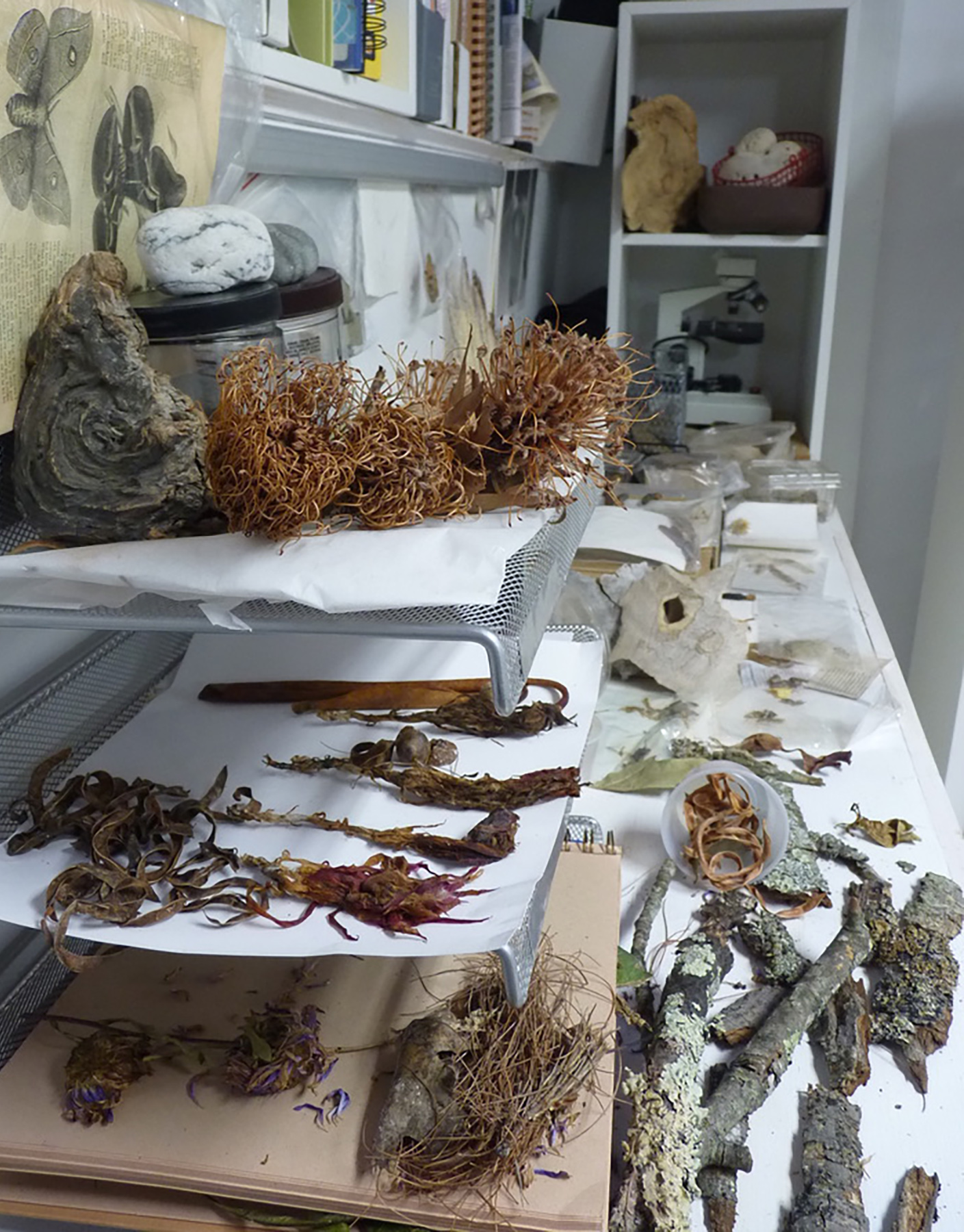 A selection of Neill's collection of natural images in her studio