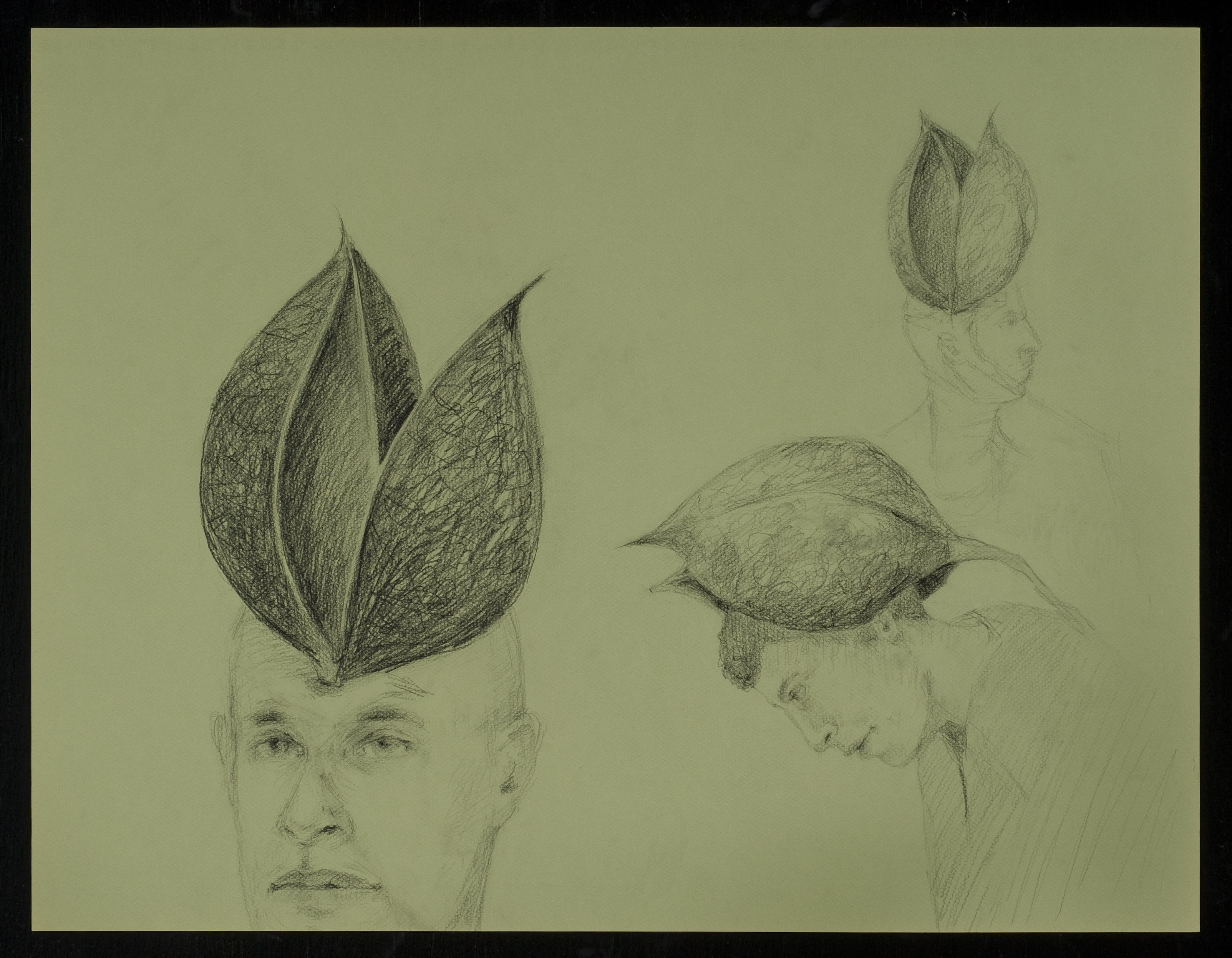 graphite, drawing, pods, pod heads, nature, balancing, seeds