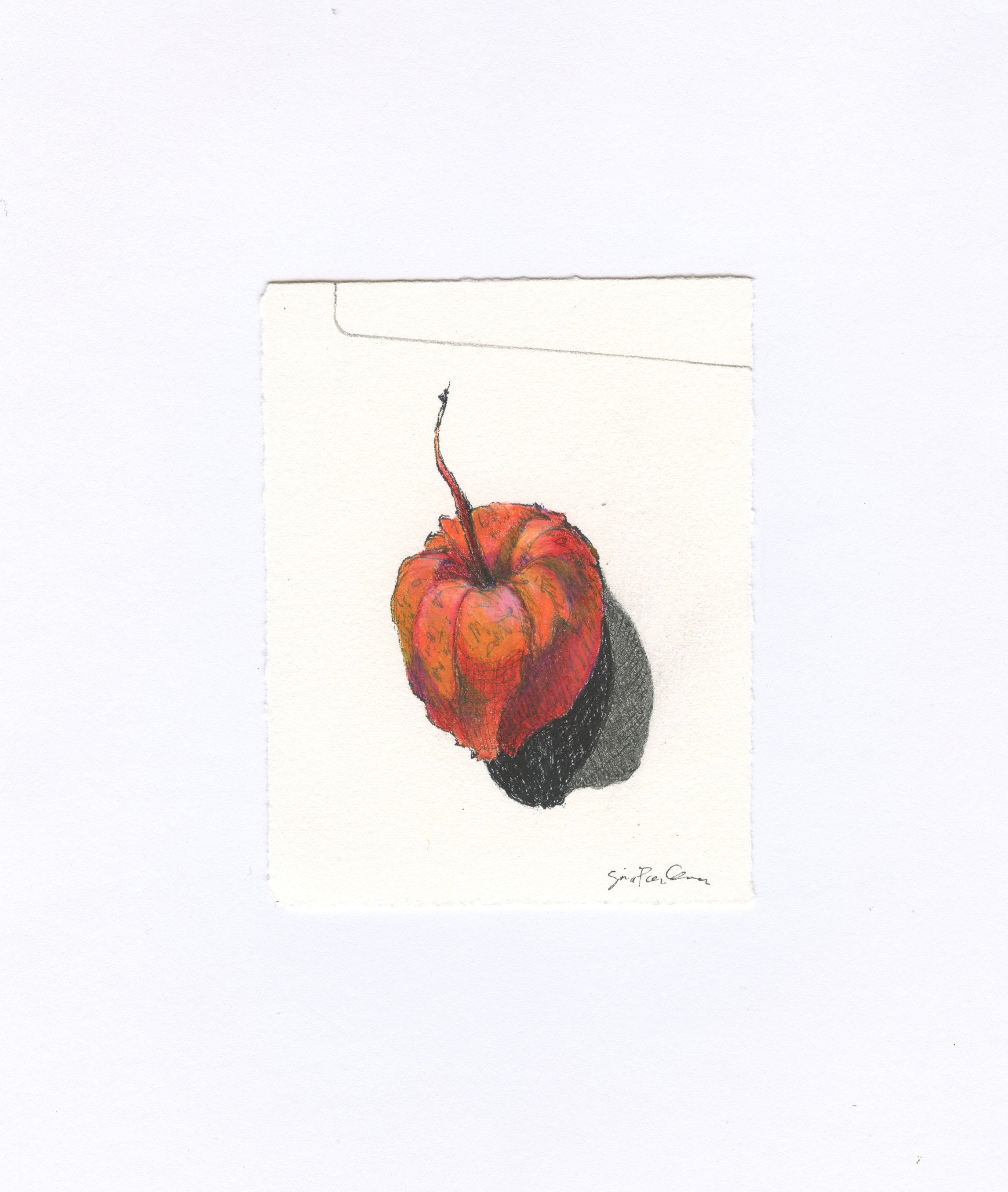 drawing, nature, mixed media, seed pod, residency
