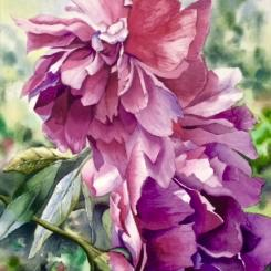 watercolor, realism, floral, peonies