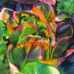 Red Lettuce, botanical watercolor painting by Elizabeth Burin.