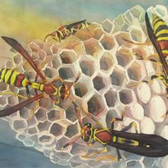 Watercolor of wasps on nest by Elizabeth Burin
