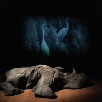 installation, sculpture, sound, western black rhinoceros, anthropocene