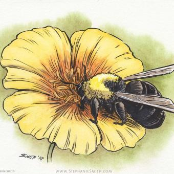 Artwork of Franklin's Bumblebee on a Yellow Poppy