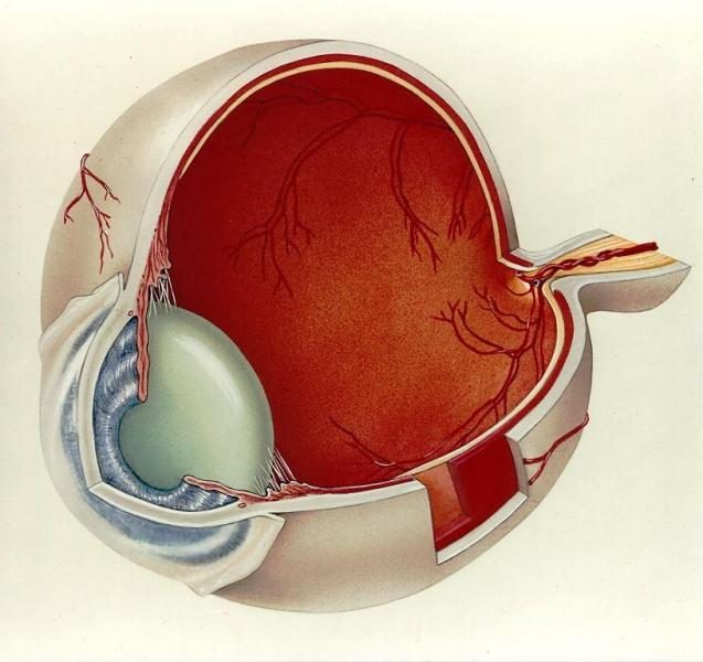 Anatomy of the Eye airbrush and colored pencil on 9x12 inch illustration board.