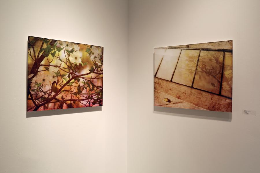 Installation View of Yellowthroat Slain at George Mason University. Photo credit: Lynne Parks. Photo editing: Rose Anderson.