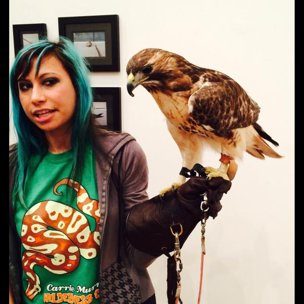 hawk at Unfriendly Skies exhibition