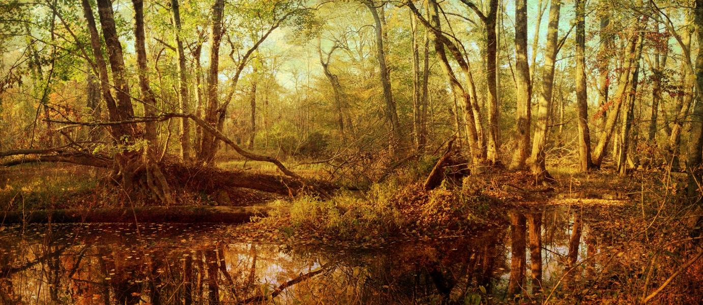 Autumn, Tuckahoe Creek