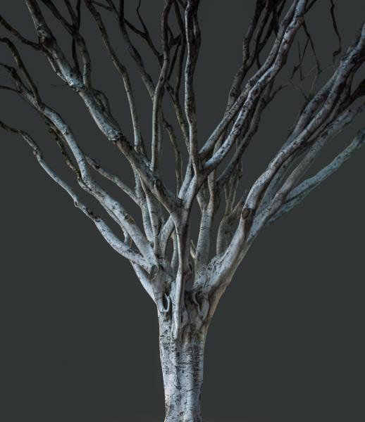 Big Bird (Tree, Los Angeles)