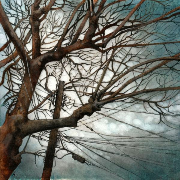 tree branches, phone and electrical wires against a cloudy sky