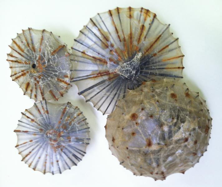 """massed ridge of forms, each one 5"""" to 12"""" in diameter, arranged as rock, coral and sand just below the seas surface"""