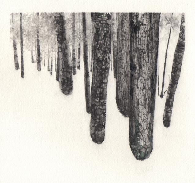 Receding Tree Line