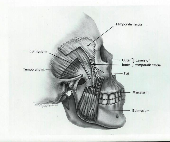 Fascial layers over the skull