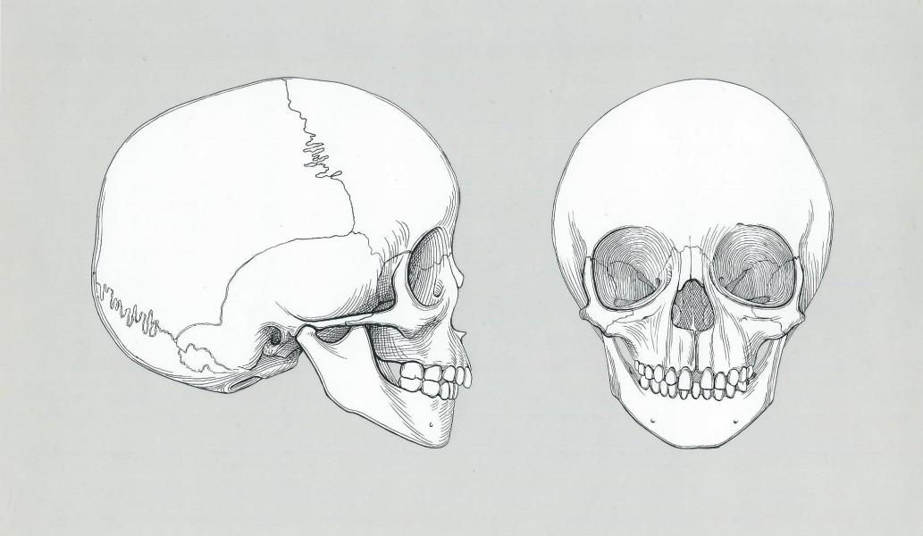 Pen and ink on Bristol board of a skull of a four year old.