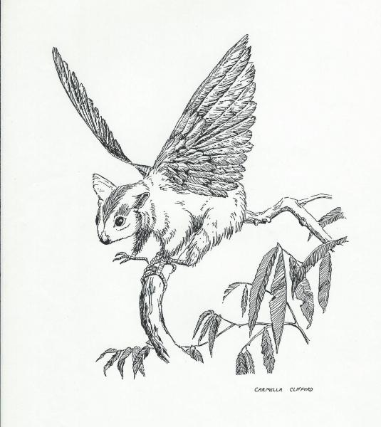 """Pen and ink drawing of a winged squirrel with scales on feet. 8x10"""""""