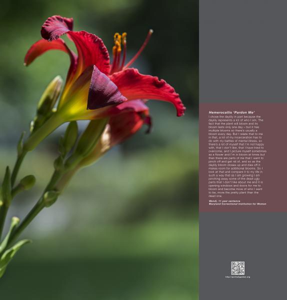 Portrait Garden (Wendi, Hemerocallis 'Pardon Me')