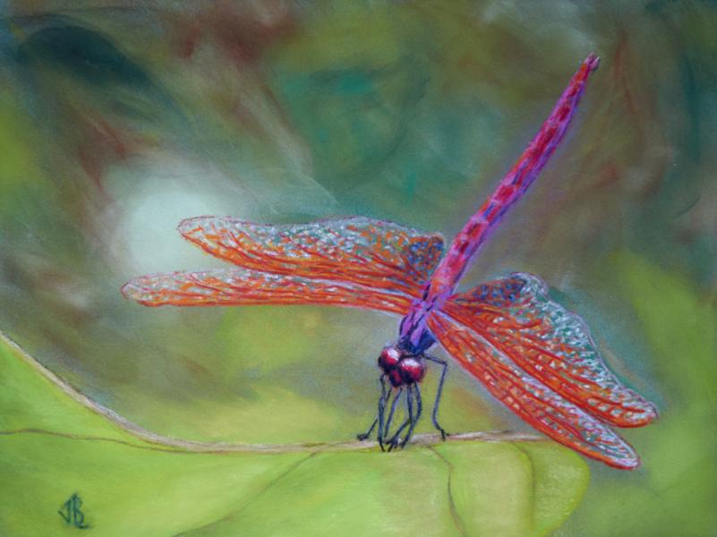 Red-Veined Dragonfly, insect, dragonfly, red-veined darter, leaf, pastel, painting, realistic, impressionist, JBL-Art, Barrie Leigh