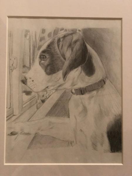 dog, portrait, graphite, multimedia,