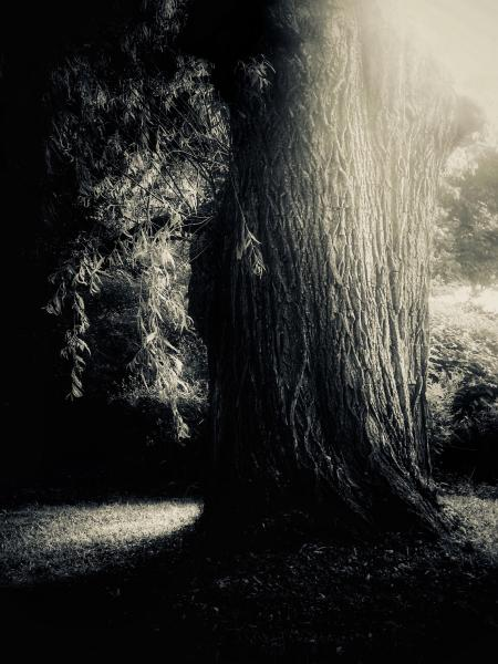 #patriciao'maille #photography #Trees