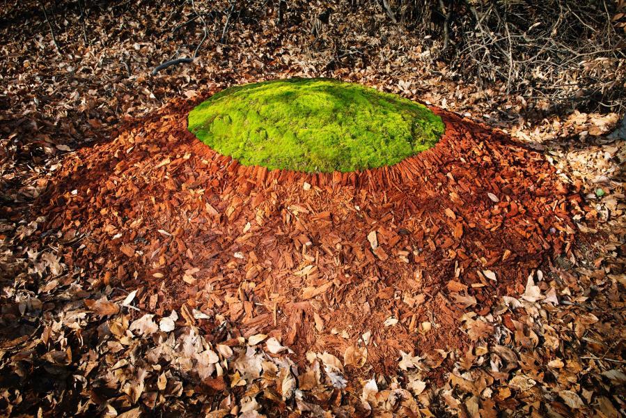stone circle, anticline, moss, earthwork, land art, environmental art, henge