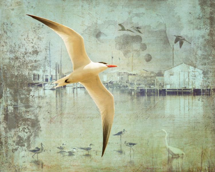 Chesapeake Bird, Photography and Photo Illustration by Rose Anderson