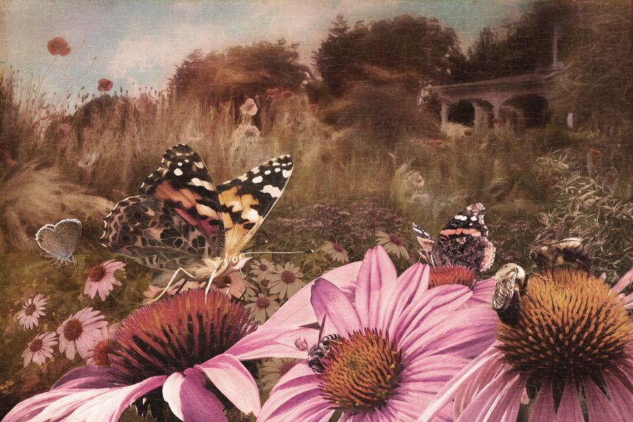 Coneflower Fantasy, Photography and Photo Illustration by Rose Anderson
