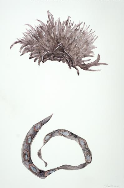 """Weed / Seedpod, 2021, Watercolor, Colored pencil, 30"""" x 20"""""""