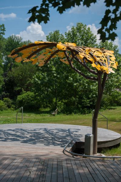 Ginkgo Canopy