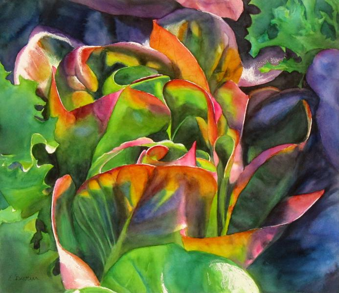 Red Lettuce, botanical watercolor painting by Elizabeth Burin