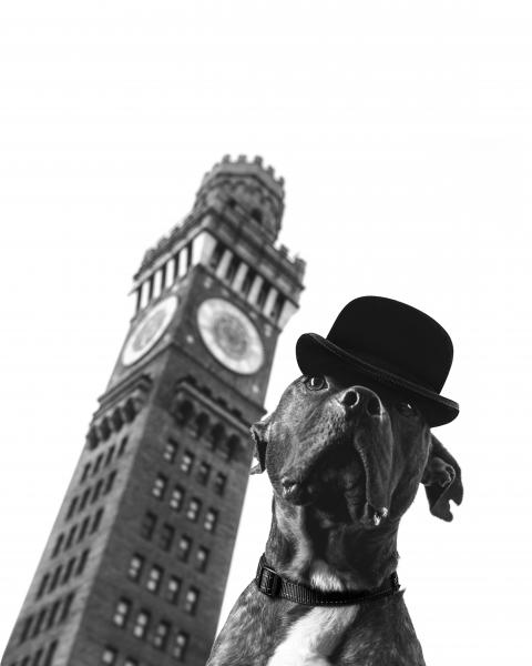 a dog wearing a bowler cap in front of the Bromo tower