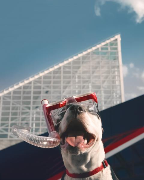 A dog wearing a snorkel at the National Aquarium