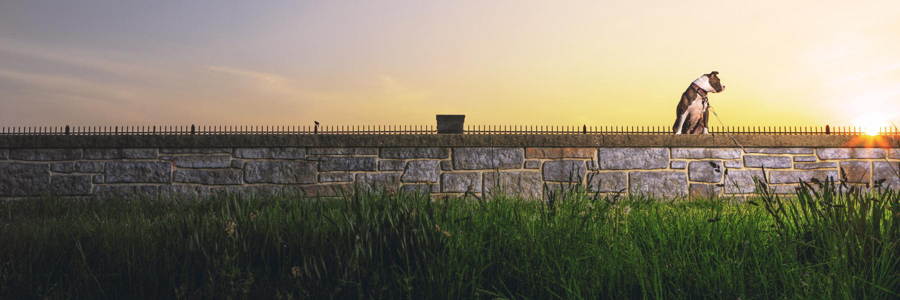 a dog standing on a wall back lit by the setting sun