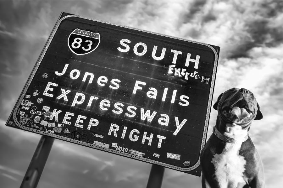a grinning dog next to a road sign for i83