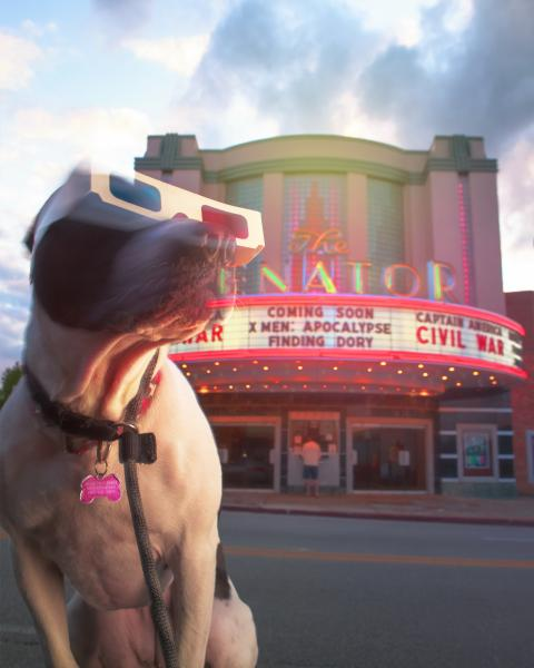 a dog wearing 3D glasses in front of the Senator Theater