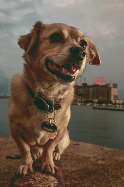 a dog infront of the Domino Sugar sign in the Baltimore Inner Harbor