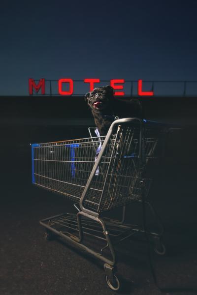 a pug in a shopping cart