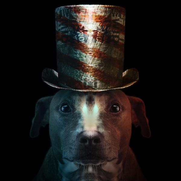 a dog wearing a paper top hat, the red and white stripes are made from what appears to be blood