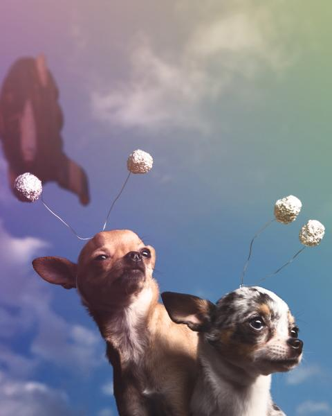 space chihuahuas in front of a rocket